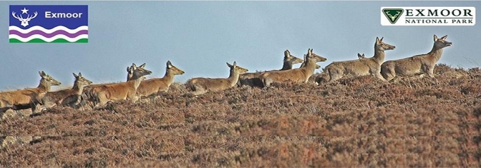 Slider Deer Home Page 4